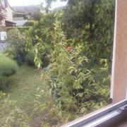 Toute les fenêtres ont vue sur le jardin